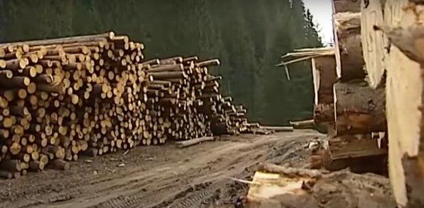 """Франківчанин злетів з котушок через страшні повені на Прикарпатті - """"Досить вирубувати ліс, кур*и"""""""