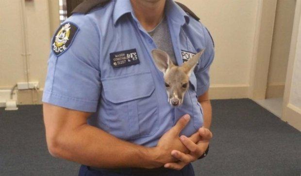 Австралійський коп усиновив дитинча кенгуру (фото)