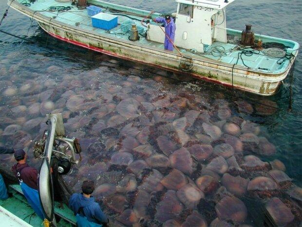 Гігантські морські істоти підпливають до берегів, щоб попередити про прийдешню катастрофу