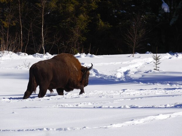 Фото: Львовского областного управления лесного и охотничьего хозяйства