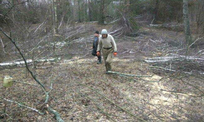 Вирубка лісів, фото: Державна екологічна інспекція України