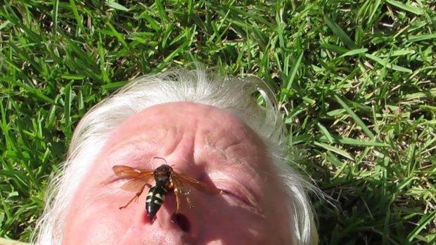 Днепрян атакуют огромные насекомые-монстры