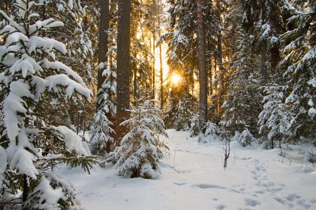 Погода на 8 грудня: синоптик розповіла про потепління