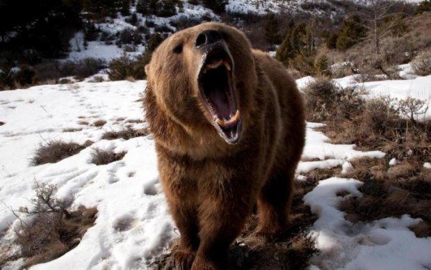 Играли на вертолетной площадке: в России медведь напал на детей