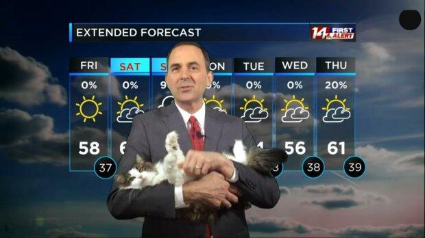 кішка веде прогноз погоди, кадр з відео