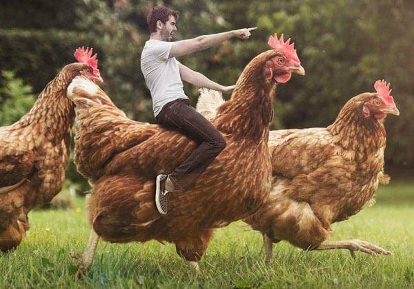 Наездник на курице - фото из открытых источников