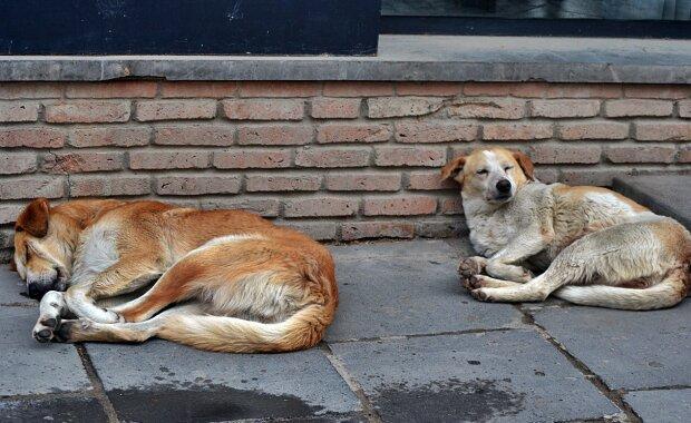 Смерть в сосиске: в Днепре догхантеры разбрасывают отравленную еду
