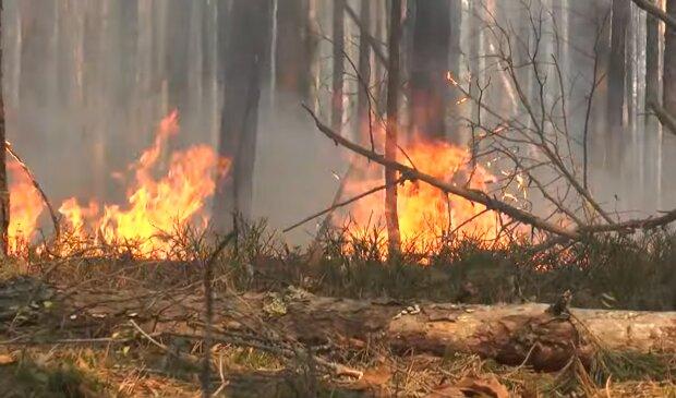 Чорнобиль палає четвертий день, пожежні перетворилися на роботів - відео попелища облетіло Україну