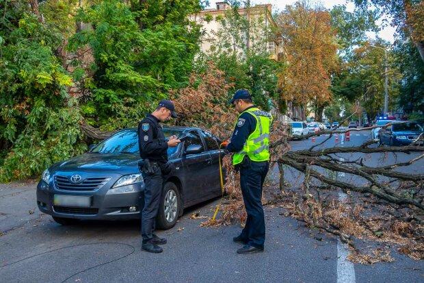 """Ледь не втратив свою """"дівчинку"""": у Дніпрі на новеньку Toyota звалилося дерево, - фотошок для водіїв"""