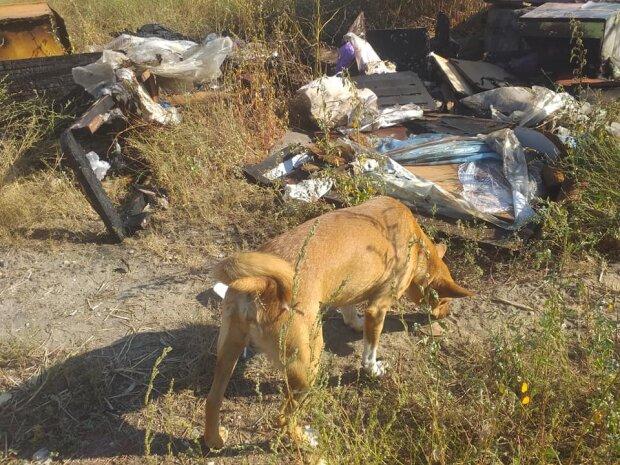 В Запорожье псих со спичками сжег десятки собачьих будок - несчастные псы горели и лаяли на всю округу