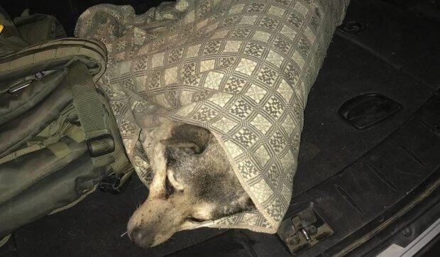 Врятована собачка, фото: Facebook (МВС України)