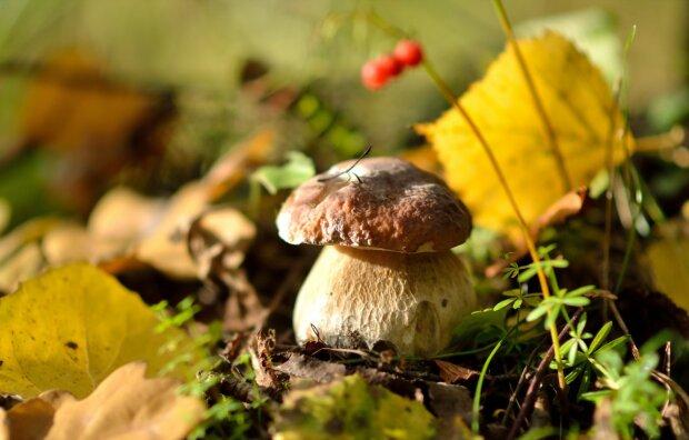 Погода на 26 вересня: четвер порадує грибників