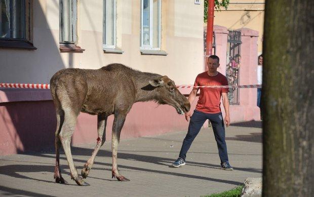 Велетенський звір, який загинув на подвір'ї львів'ян, не на жарт зацікавив зоологів: відео