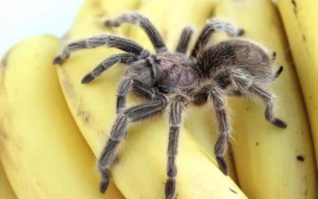 Банан може виявитись останньою їжею у вашому житті, і ось чому
