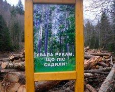 викрито масштабну незаконну вирубку дерев