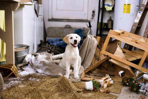 Нестерпне сусідство: мешканці багатоповерхівки сходять з розуму від двадцяти собак у двокімнатній квартирі