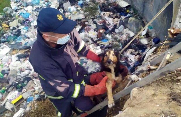 Надзвичайники визволили собак, фото ГУ ДСНС у Хмельницькій області