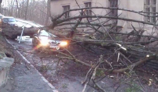 Дерево впало на львівське таксі: у водія струс мозку (відео)