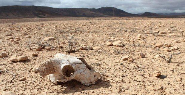 Вимирання не уникнути: вчені пророкують людству довгий і болісний кінець