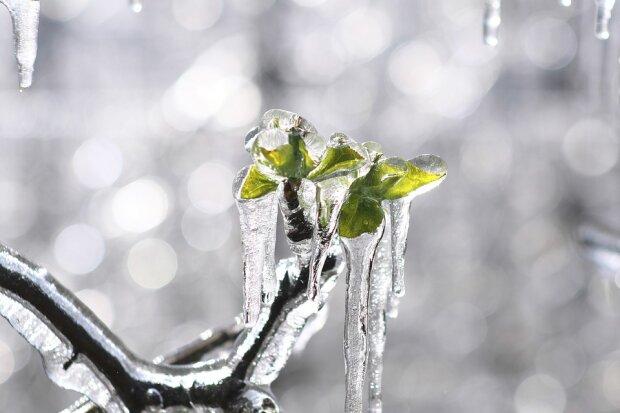 24 лютого погода розділить Україну на весну і зиму