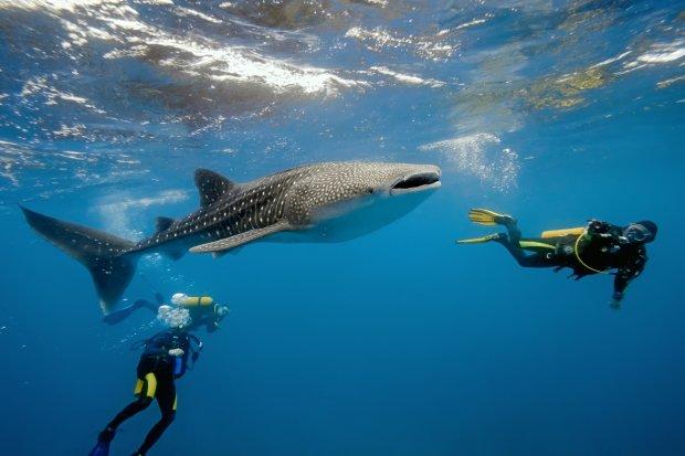 Рибалки показали свою неймовірну здобич. Їм вдалося зловити найбільшу рибу у світі