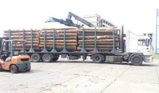 Затримані шахраї збули деревини на 60 мільйонів гривень