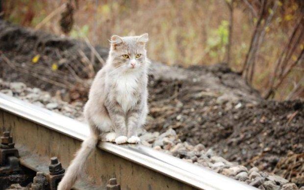 Вот это уровень: министр остановил поезда из-за кота