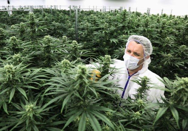 Легалізація марихуани в Україні: хто підтримує петицію та в чому її користь