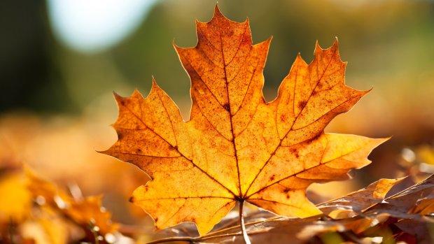 Погода на 9 листопада: п'ятниця засліпить і приморозить українців