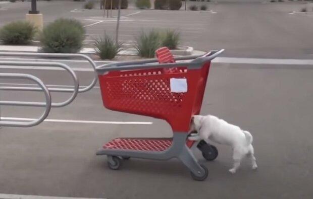 самий розумний пес, скріншот з відео