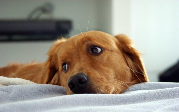 У мережі показали зворушливі кадри зустрічі собак з господарями після довгої розлуки: хочеться плакати, радіти і жити