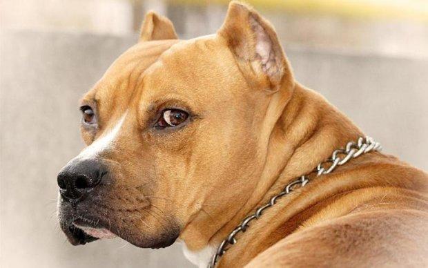 Український суд вперше конфіскував собаку. Тварина нічого не коментує