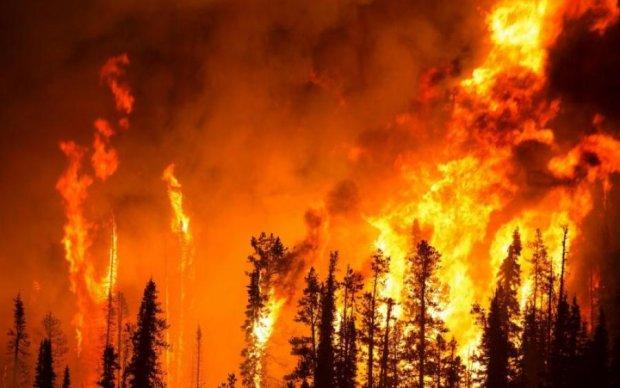 На Киевщине бушует пожар, километры огня и дыма: фото