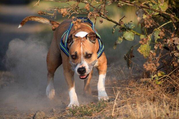 Собака / фото: Pixabay