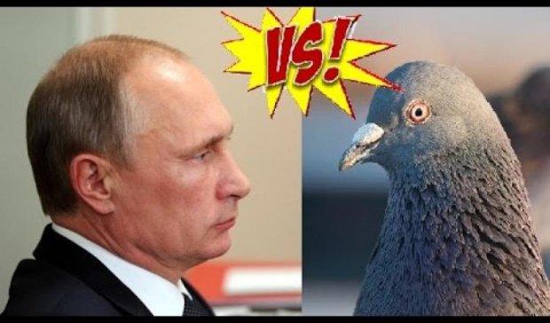 Я голубь, но у меня очень мощные железные крылья! - Путин