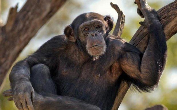 """Отряд шимпанзе: как боевики """"ДНР"""" украинский беспилотник сбили"""