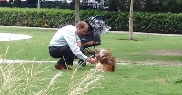 Собака в колясці, фото Facebook