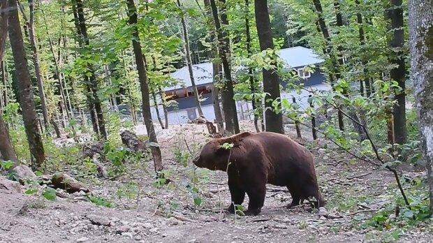 Ведмідь, скріншот
