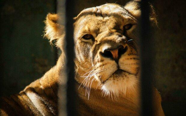 У Кабміні мають намір відмовитися від тварин у цирку: що тепер буде зі слонами і тиграми