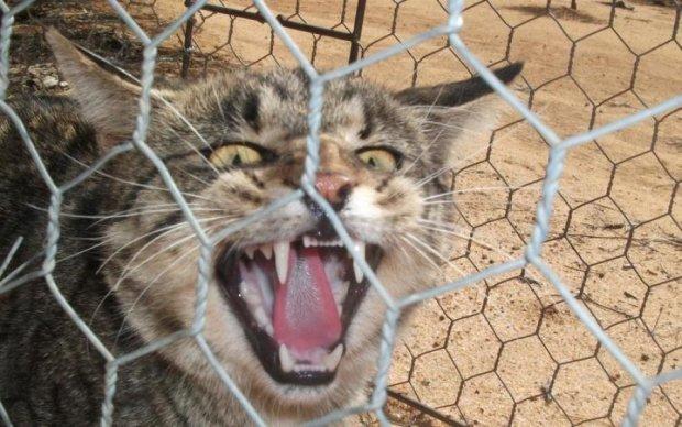 Дьявольские коты терроризируют Австралию