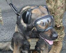 Пес спасает жизнь украинским воинам, фото из свободных источников