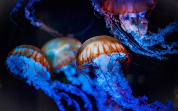 Гигантская медуза повисла над городом: видео