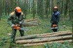Вирубка лісів, фото 112 Україна