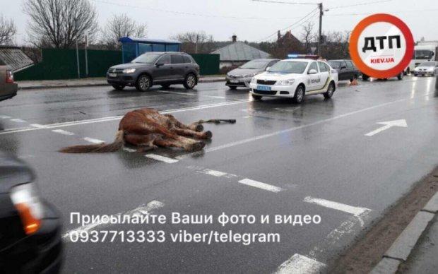 Daewoo снес лошадь под Киевом
