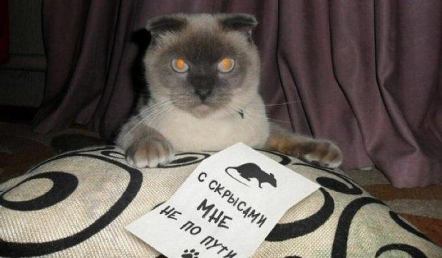 Кіт створив демократичну партію