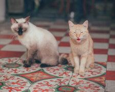 коти, pxhere