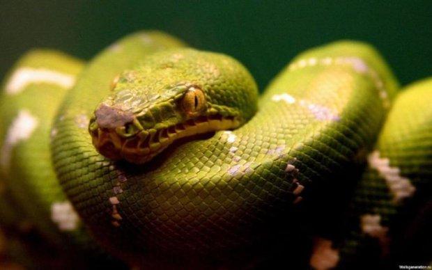 Боитесь пауков и змей? Ученые объяснили, почему