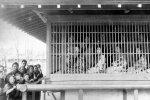 Мурашки по коже: эти исторические фотографии завораживают и пугают одновременно