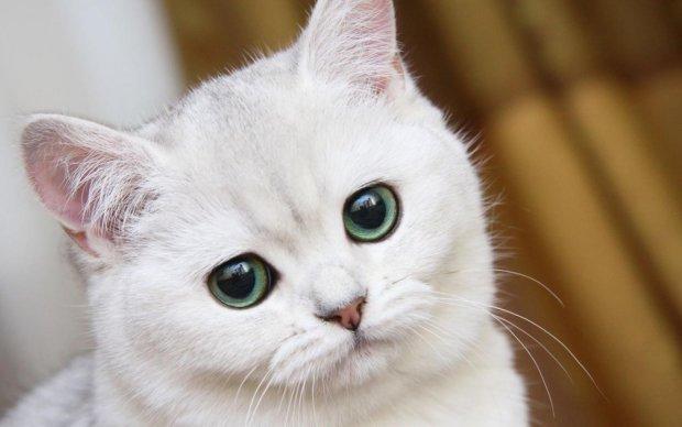 Ученые доказали: коты нас понимают, просто игнорируют