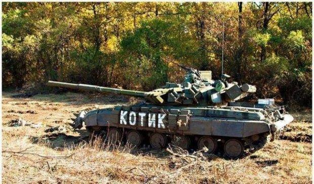 Українська котяча армія на передовій (фото)